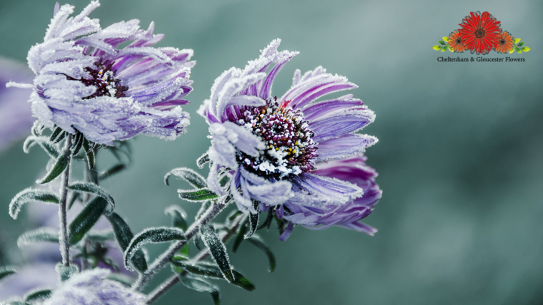 Colder Weather: How to Look After Your Flowers